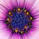 Stunning HD Wallpapers For Your Desktop #46