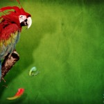 Stunning HD Wallpapers For Your Desktop #51