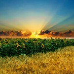 Stunning HD Wallpapers For Your Desktop #52