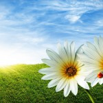 Stunning HD Wallpapers For Your Desktop #54