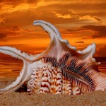 Stunning HD Wallpapers For Your Desktop #55