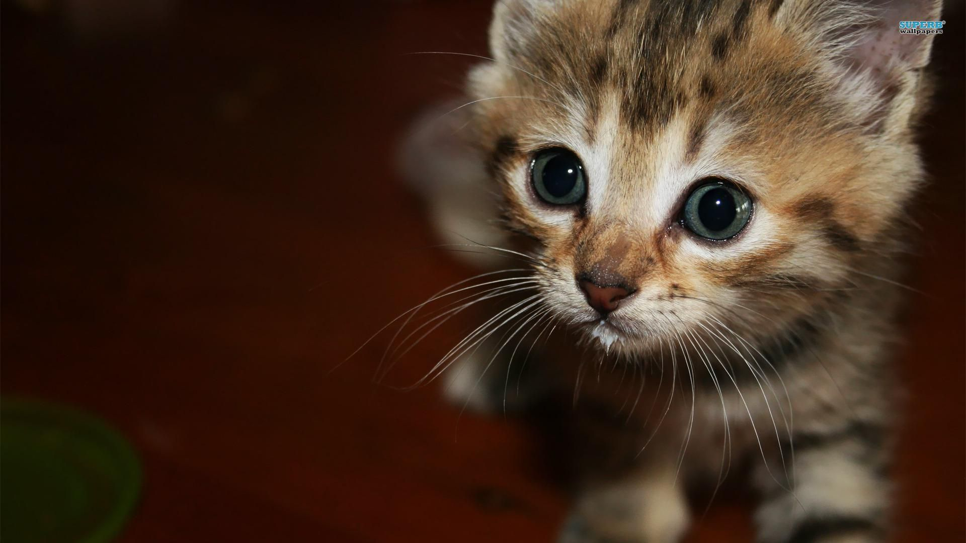 Happy kittens hd wallpapers i have a pc - Kitten wallpaper hd ...