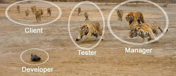 software development ecosystem : funny