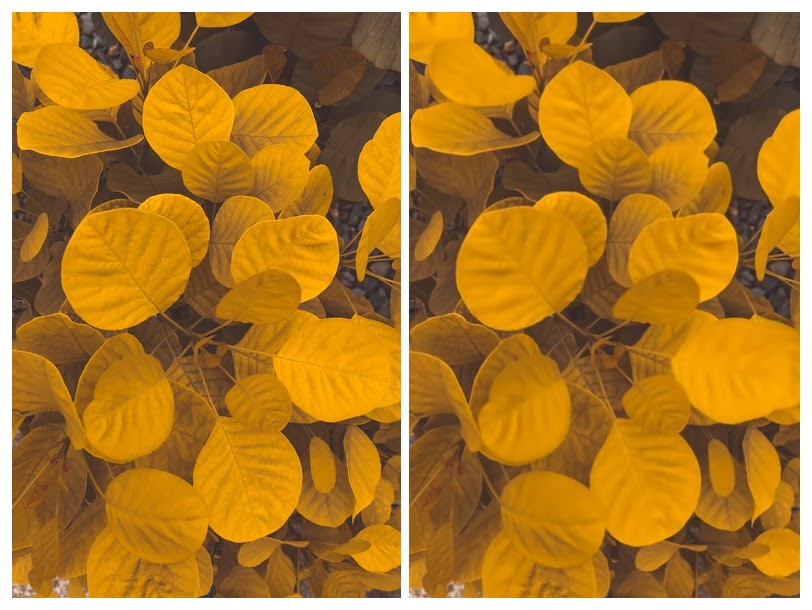 original image vs denoised image processed using AI Image Denoiser